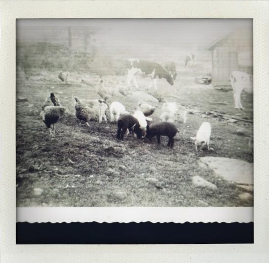Bloomville - Farm Life