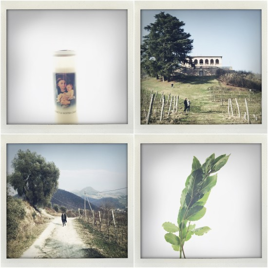Sant'Antonio Candle / Villa dei Vescovi / Colli Eugenei / Bay Leaves